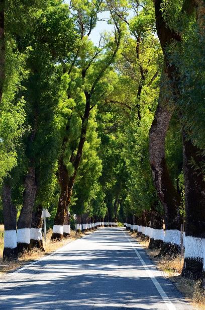 Antigamente no Alentejo chamavam-lhe assim as árvores assim pintadas